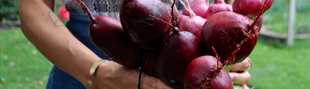 From Garden to Table: Pickled Beets