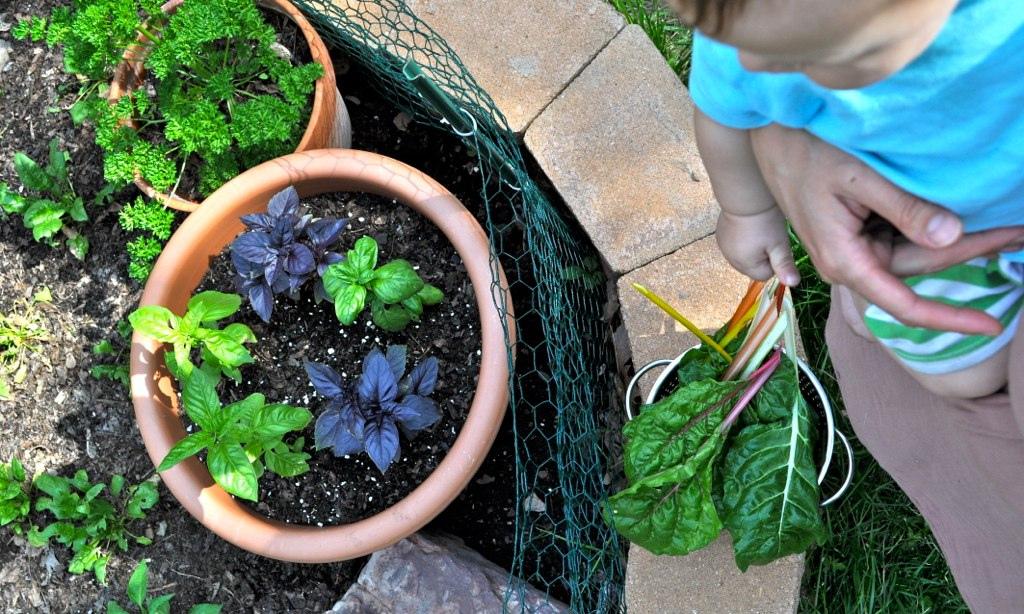 First Garden Harvest